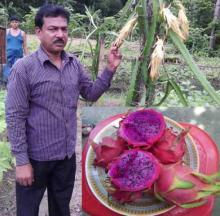 Dreams mount with dragon fruit cultivation