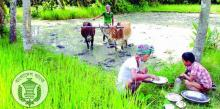 BB postpones agriculture credit recovery in haor areas
