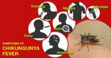 Experts for destroying mosquito breeding sources to prevent chikungunya