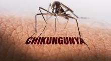 4 rules should be followed by Chikungunya patients: expert