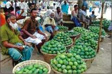 Rajshahi region markets witness sufficient supply of mangoes