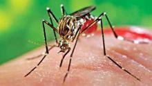 DSCC to provide free treatment for Chikungunya patients at home