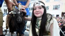 In a remote Irish town, a goat reigns supreme