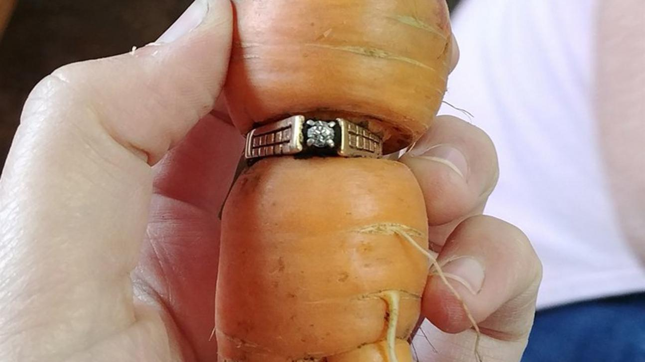Lucky carrot: Woman finds lost engagement ring after 13 years