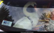 Lawless Swan arrested for road rage