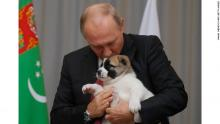 Pup-lover Putin gifted new dog for birthday