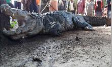 India man wakes up to crocodile shock