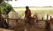 Over 1.50cr people get benefits of 'Ektee Bari-Ektee Khamar' project