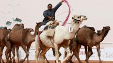 Camels banned from Saudi beauty contest over Botox
