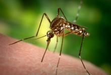 Why mosquitoes bite you more