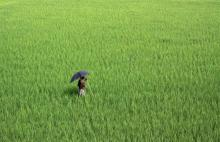 Agriculturist Day today