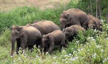2 killed in Ukhiya elephant attack