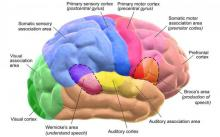 Menopausal hormone therapy linked to higher brain skills