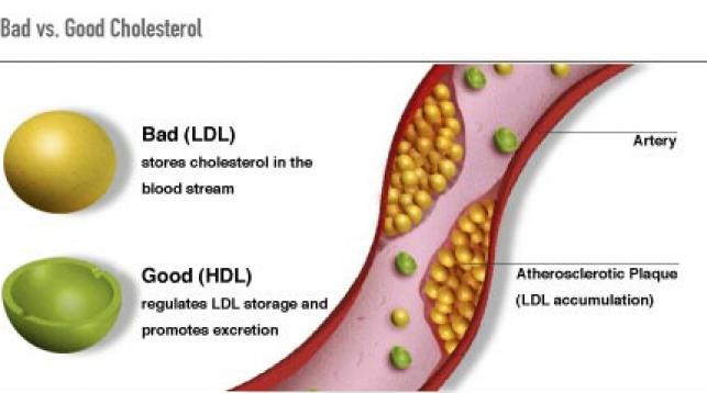 Good cholesterol's bad effects