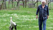 Faithful storks keep long-distance love alive in Croatia