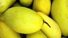 Mangoes in this summer