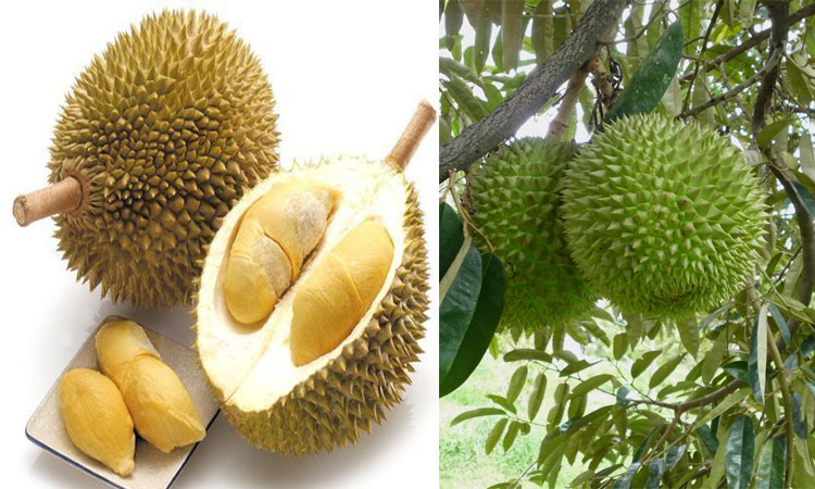 Rotten fruit causes Melbourne university evacuation