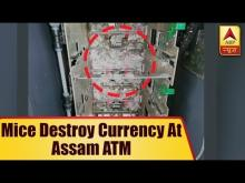 Rats munch million rupees inside Indian ATM