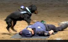 Police dog tries to revive trainer!