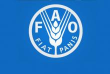FAO recognizes Bangladesh as 3rd top fish producing country