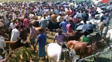 20 cattle markets to be set up in capital