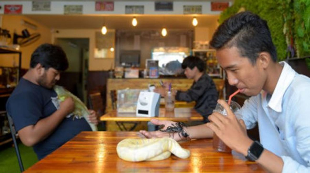 Cambodian reptile cafe slithers into people's hearts