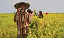 Govt to give Tk 80 cr agriculture incentive