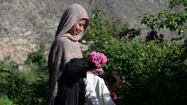 Afghan farmers prefer roses to guns