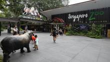Singapore eco-tourism plan sparks protest