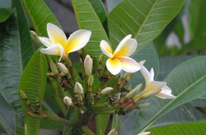 Photo Devdas Majumder:bbarta24.net