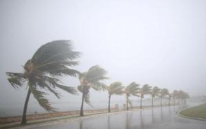 Palm trees sway in the wind prior to the arrival of the Hurricane Irma in Caibarien, Cuba, on 8 September 2017. Photo: Reuters